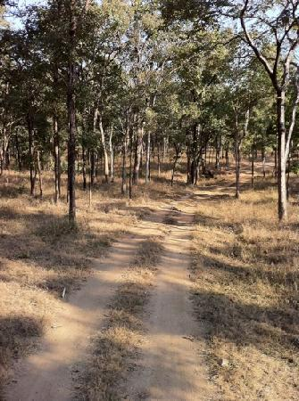Pench National Park, India: Pench