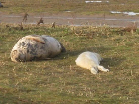Donna Nook Nature Reserve: Mother and Baby