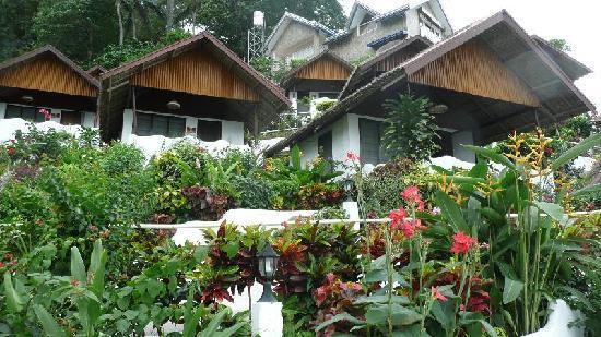Steps Garden Resort : Cottages