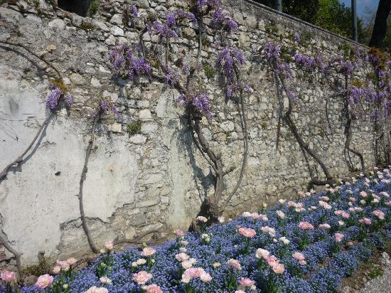 Tremezzina, Italië: splendida fioritura!