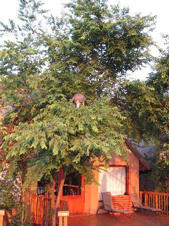 Kingfisher Lodge: beautiful lodges