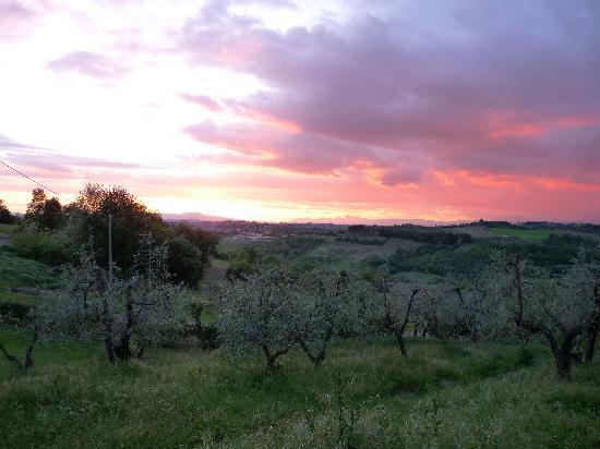 Le Fonti a San Giorgio: Olive trees sunset