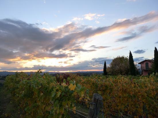 Le Fonti a San Giorgio: more vineyard