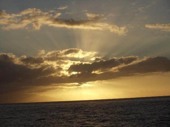 Maui Tradewinds 사진