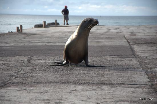 San Cristobal, Ekuador: Where even the Sea Lions look both ways before crossing!