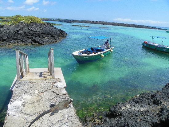 Galapagos Alternative: Isabella