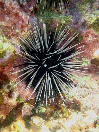 Arwana Perhentian Eco Resort & Beach Chalet: Diving picture