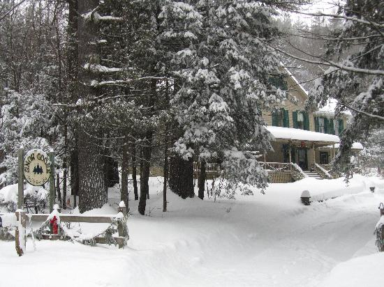 Snow Goose Bed and Breakfast: Woodland serenity beckons!