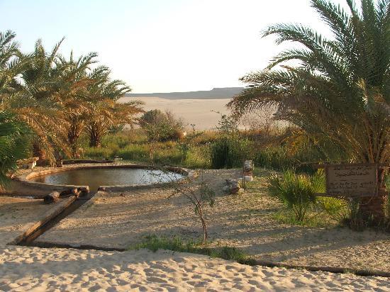 Siwa Paradise: au détour des dunes ,un oasis avec une source naturelle d'eau chaude!