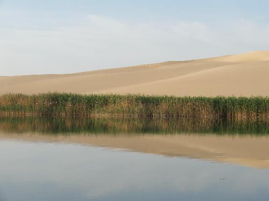 Siwa Paradise: la faune et la flore au milieu de nulle part! le paradis,mais un peu chaud...40degrés