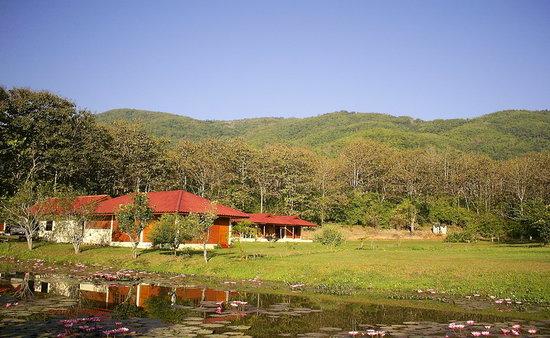 Nok's Garden Resort: mittlerweile ist alles toll grün eingewachsen