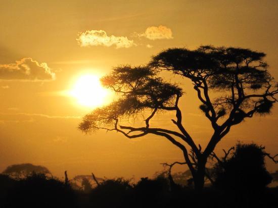 Ol Tukai Lodge: im Sonnenuntergang