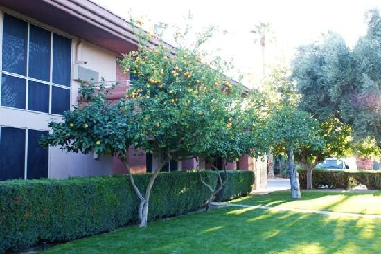 BEST WESTERN Date Tree Hotel: Date Tree Best Western Fruit Trees