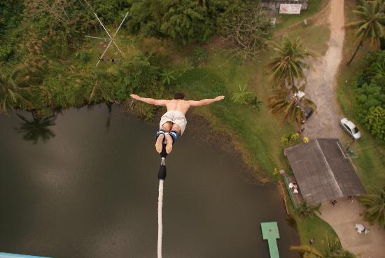 Jungle Bungy Jump: It's not flying it's falling with style!