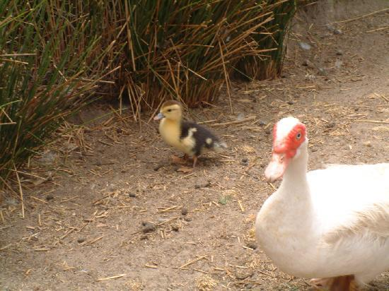 Middelvlei: Little Farmyard