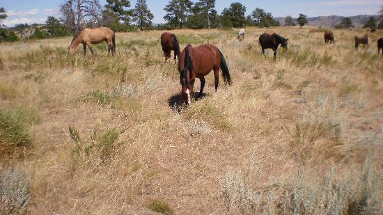The Black Hills Wild Horse Sanctuary : Up close with the horses