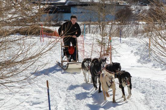 Scuola Sleddog Federale Nazionale : Hundegespann