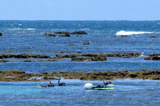 Gales de Maragogi : Snorkel Cerca de Mar Abierto cerca da la Playa de Ponta de Mangue