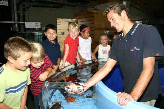 Dana Point, Californië: The Ocean Institute is home to hundreds of marine animals, many in touch tanks.