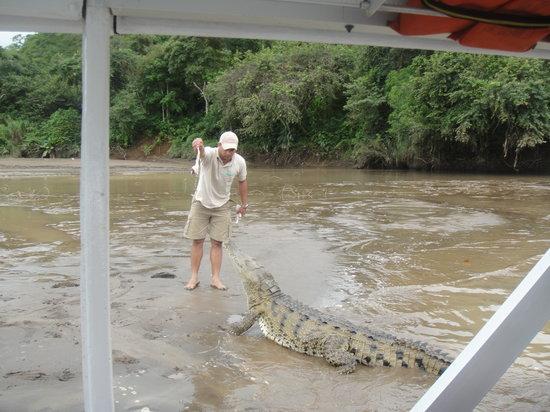 Jungle Crocodile Safari: Feeding the crocs