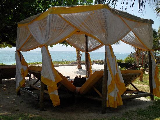 AfroChic Diani: Absolute Bliss