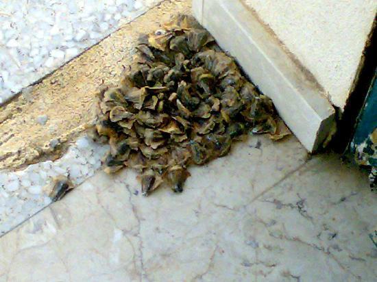 Hotel Miramare: Resti di carciofi all'esterno della camera.