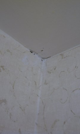 Fairfield Inn Fayetteville : What appears to be MOLD on the bathroom ceiling