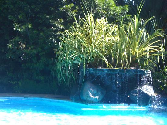 Atlantis Dive Resorts Dumaguete: Th pool - small but perfectly formed