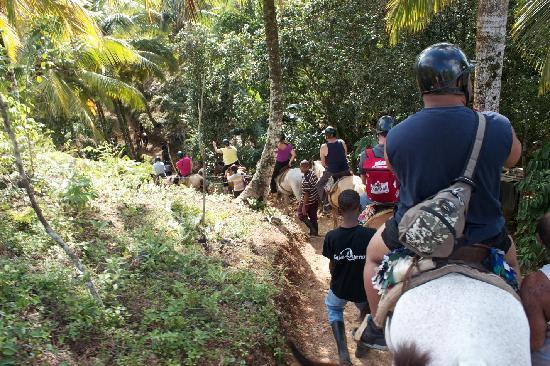 El Salto del Limon : horses on the trail