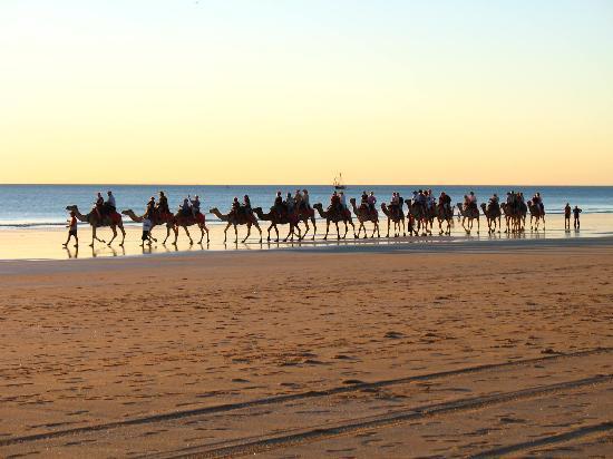 Broome, Australië: Kamelreiten zum Sonnenuntergang