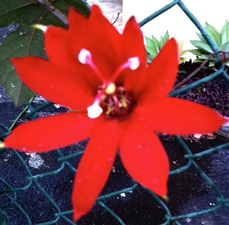 Vista Linda Montana: Garten