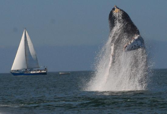 Ocean Friendly Whale Watching Tours: Breach