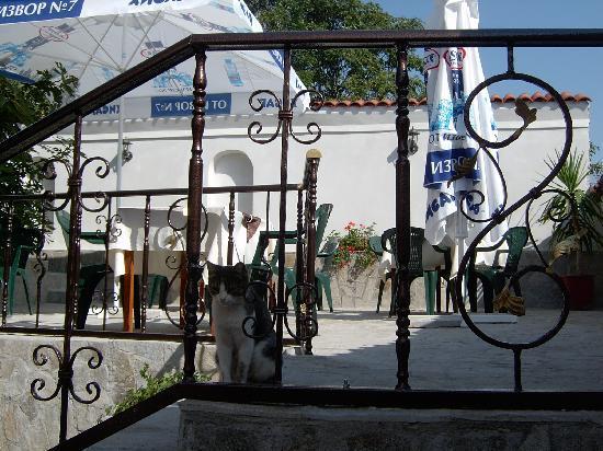 Hotel Belle Ville : Yard