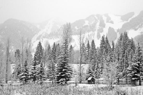 Aspen Center for Environmental Studies: Hallam Lake- Winter