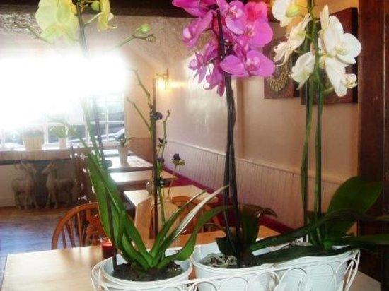Tookta's Cafe`