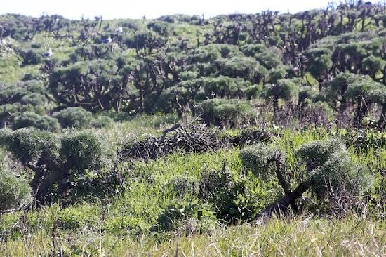 Channel Islands National Park, CA: Anacapa trail side