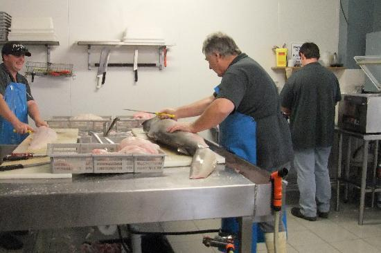 Kingscote, Australia: processing shark