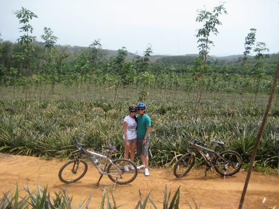 Phuket Town, Thailand: Pineapple plantation