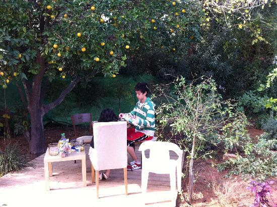 Ganei Am, Israel: Eating under the orange tree