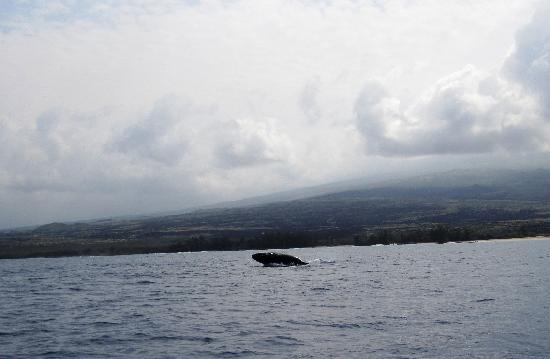 Coral Reef Snorkel Adventures : Whale of a time...