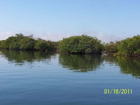 King David Tours: Mangroves