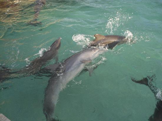 Paradise Beach Hotel: delfini con noi!!!!!!