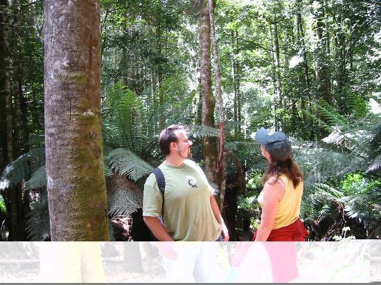 森林漫步小屋酒店照片