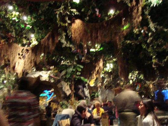 Rainforest Cafe Inside Picture Of Rainforest Cafe