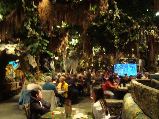 Inside View 3 Picture Of Rainforest Cafe Orlando