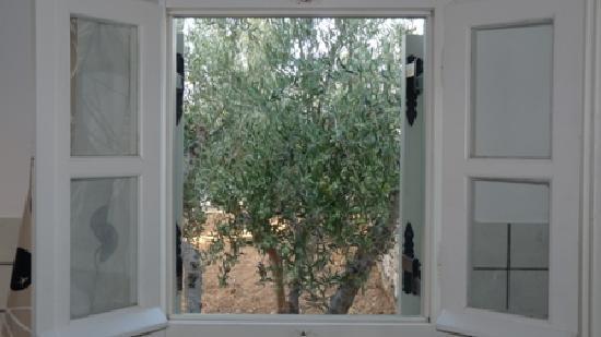 gli ulivi dalla finestra della cucina - Picture of Elizabeth ...