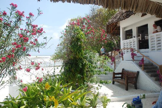 Red Monkey Beach Lodge: red monkey lodge