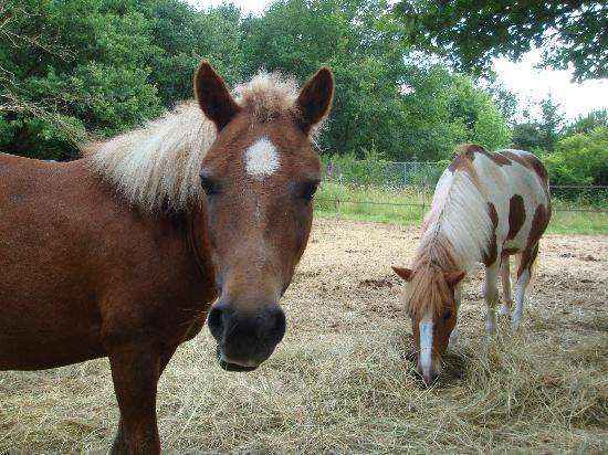 Les Roulottes de Bois le Roi: Les charmants poneys