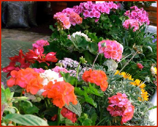 Posada La Merced Antigua: Flower bed at back patio