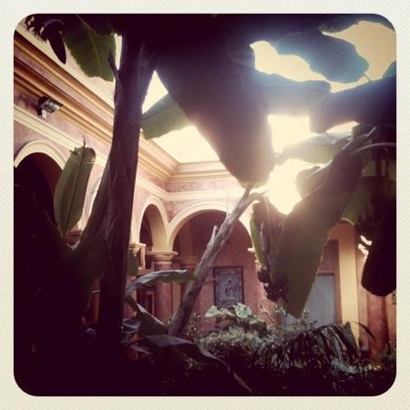 Hotel Casa Mexicana: garden